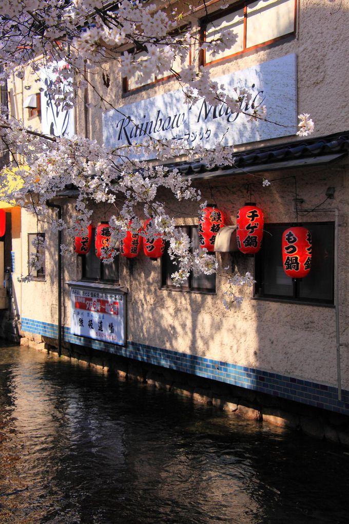 飲み屋が多い三条から四条にかけての「高瀬川」沿い