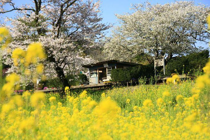 里山に囲まれた駅ホームは春色の空間!「飯給駅」