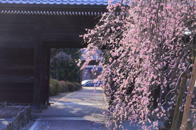 参拝後は本堂を背にして境内庭園を眺めてみよう!