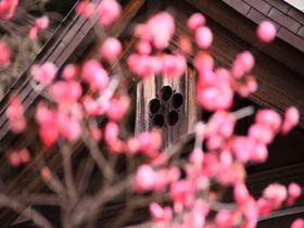日本三大天満宮の一つ!梅の花が綺麗な鎌倉「荏柄天神社」