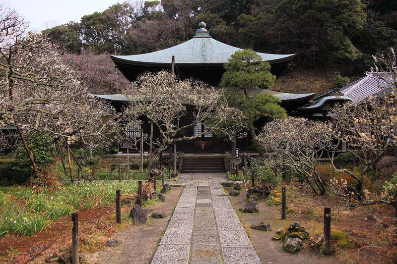 山間部に囲まれた境内に漂う梅の香りを堪能!鎌倉「瑞泉寺」