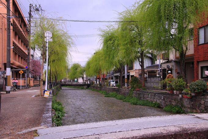 柳の木が川沿いに植えられた三条から四条までのエリア!