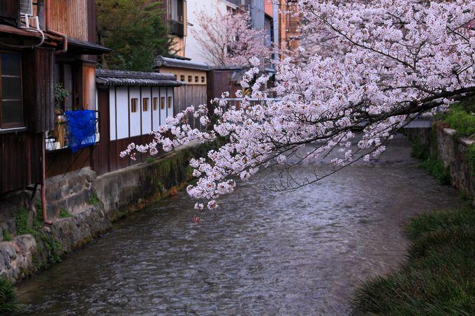やがて「祇園白川」の手前まで流れてくると・・・