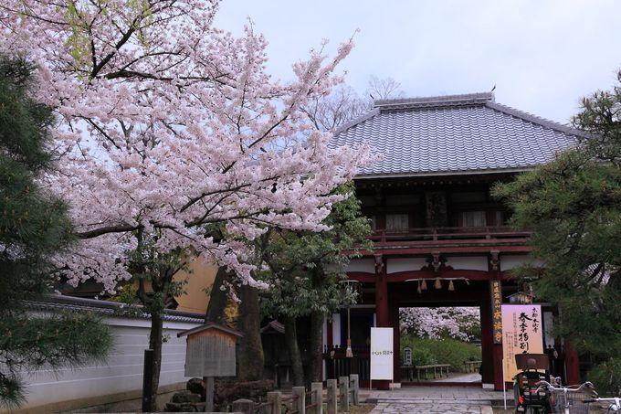 多宝塔と桜のコラボレーションは必見!「本法寺」