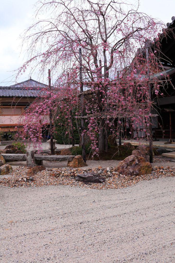 本堂裏手と庫裏の間の庭園にはしだれ桜が!