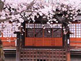 桜色に包まれた境内庭園を堪能しよう!京都西陣の「本隆寺」