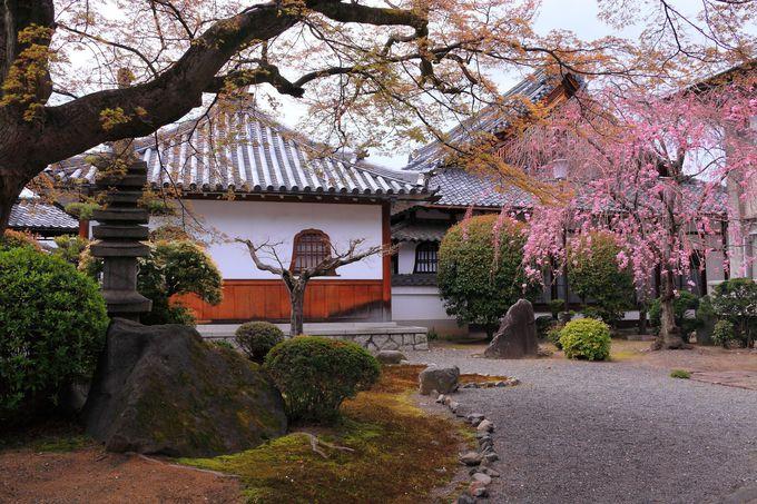 本坊と客殿の囲まれたエリアは枝垂れ桜が咲く庭園