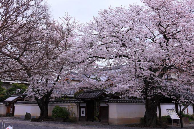 東側の山門から入るとピンク一色の世界が広がる!