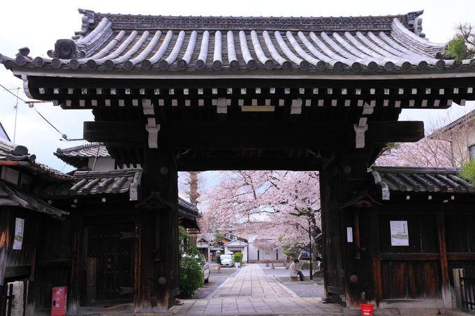 桜色の境内庭園へは東側の智恵光院通り沿い山門からの入山をオススメ!