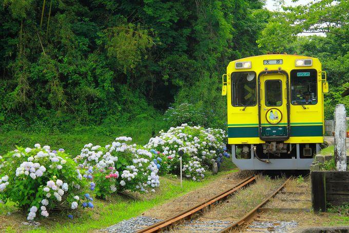 緑多き環境に囲まれた「西畑駅」