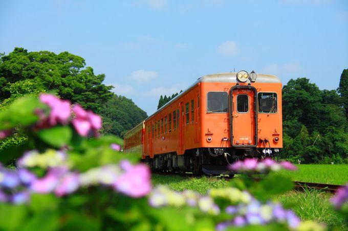 様々な色の紫陽花が咲き乱れる!「西畑駅東側」