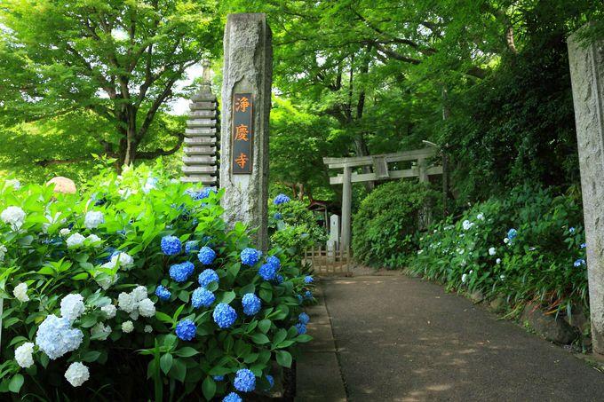5.浄慶寺