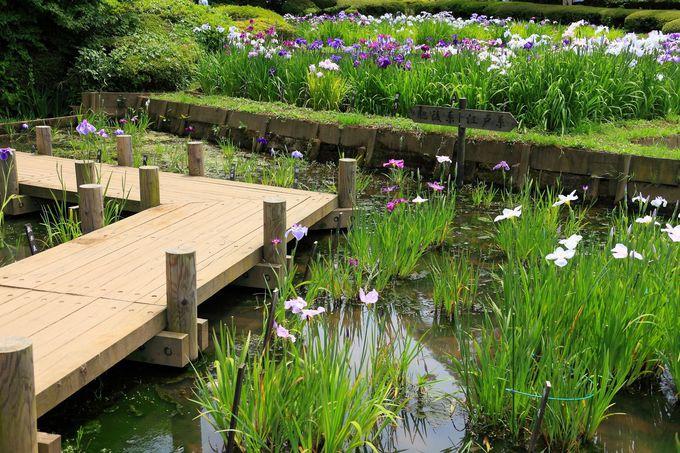 6月のメインは園内南側の湿地エリア!