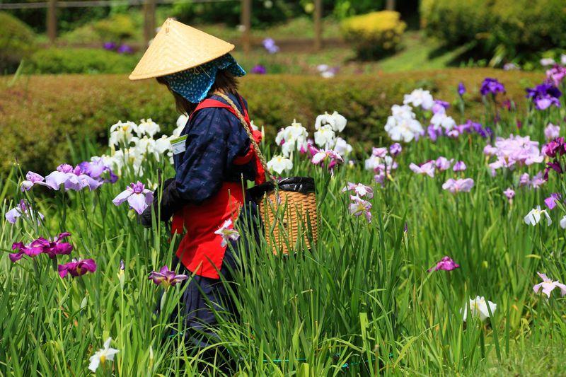 都内とは思えない里山風景の中で菖蒲を堪能!6月の「薬師池公園」
