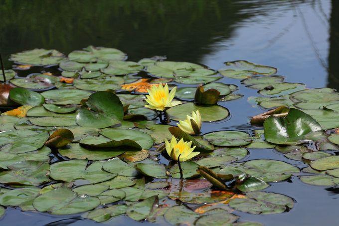 公園名所でもおなじみの「薬師池」と「新東京百景」の案内柱