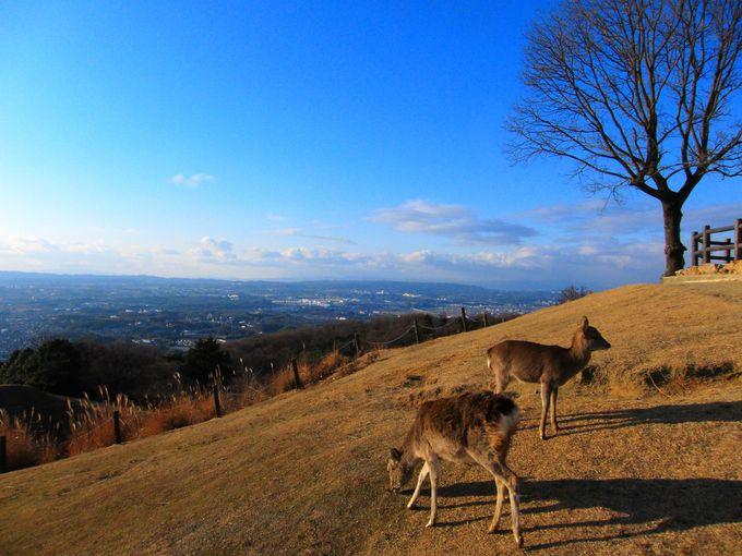 運が良ければ展望ポイントでは野生の鹿がお出迎え!