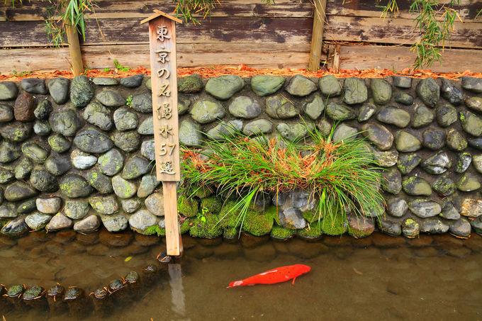 「桜坂」の西側にある「六郷用水の跡」