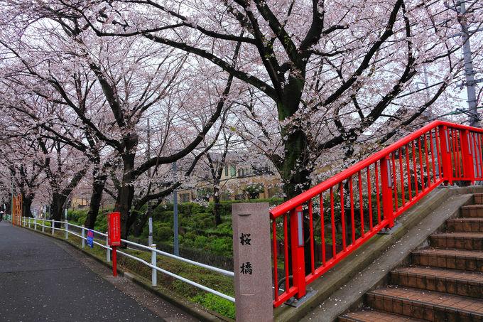 「桜坂」の名物の赤い橋