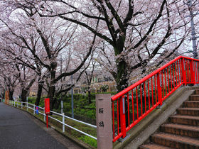 福山雅治さんが歌う「桜坂」の舞台は大田区田園調布にあり!
