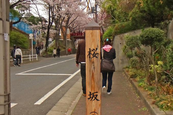 鉄道駅からアクセスしやすい「桜坂」