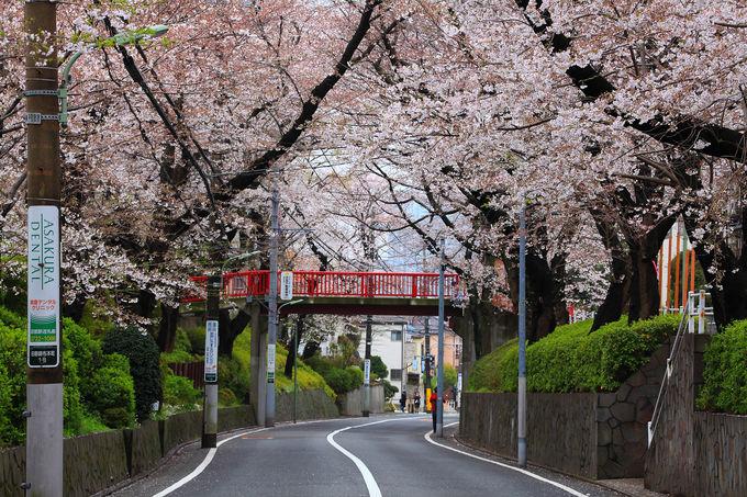 車道側から見る「桜坂」も風情あり!