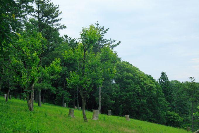 長ーい滑り台は人気もの!「とりでの森」