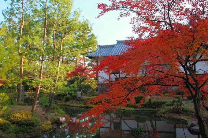 境内東側にある心字池を中心とした庭園は色彩豊か!