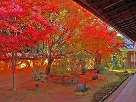 これで穴場なの?!真っ赤な紅葉庭園が美しい京都「興臨院」