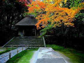 白砂壇と紅葉のコラボは晩秋の芸術作品!京都「法然院」
