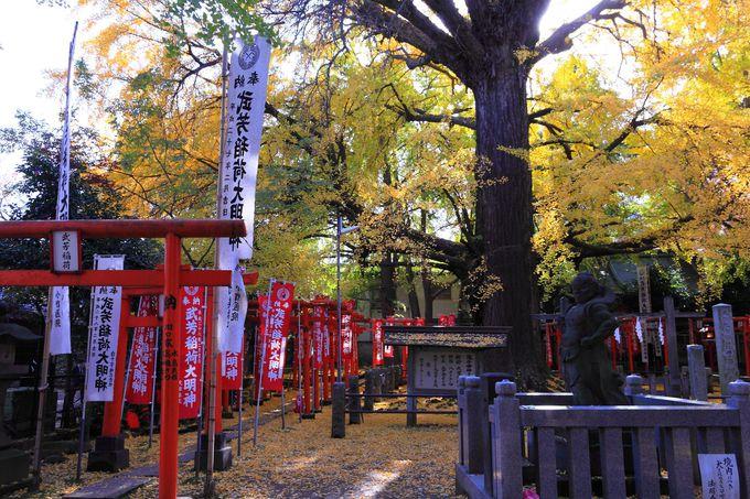 真っ赤な鳥居が建つ参道の先には「武芳稲荷」と樹齢約600年の大イチョウが!!
