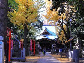 黄金色の境内へようこそ!イチョウが美しい東京「鬼子母神堂」