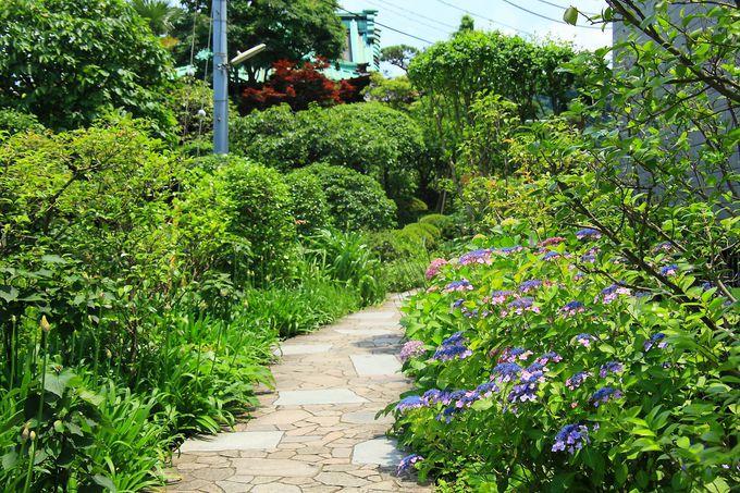 花が咲き乱れる境内庭園も見逃してはいけない!