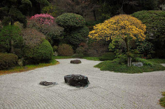 見所は竹林だけではない!梅の花も咲く「報国寺」