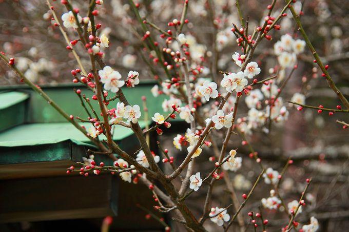 境内入口の大鳥居が目印の「鎌倉宮」