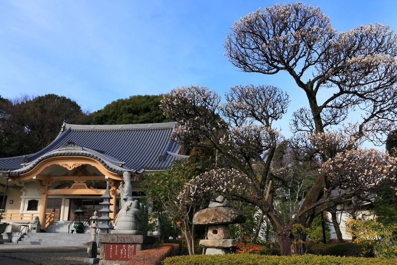 梅の花観賞は町田の超穴場へGO!石像いっぱいの「祥雲寺」