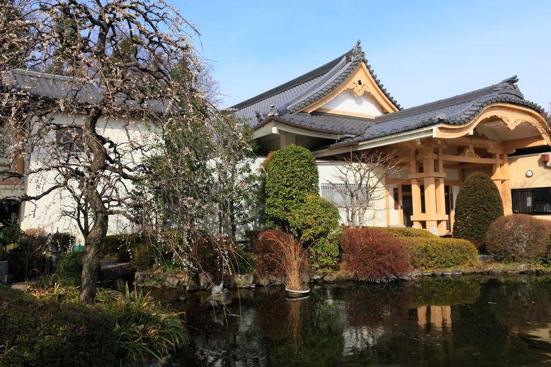 梅の花が咲き乱れる池泉式庭園へ!