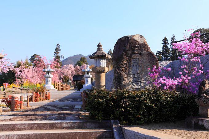 春の気配が感じられる「慈雲寺」の参道