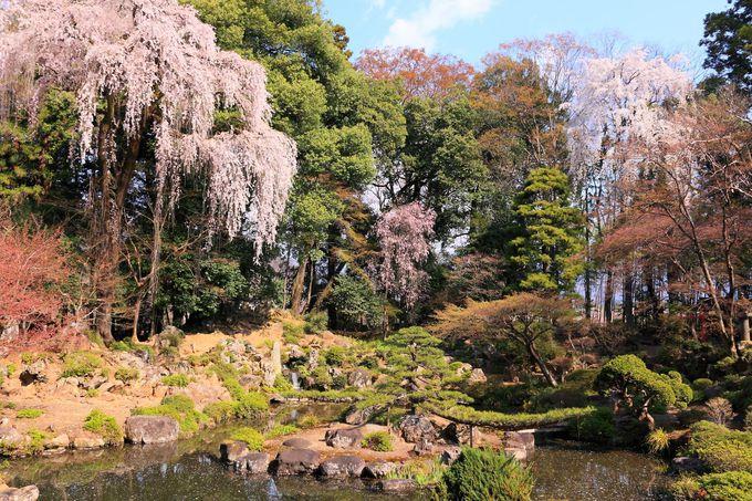 締めの恵林寺庭園は枝垂桜が咲き乱れる極上空間!