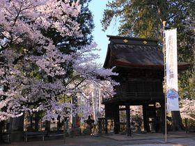 武田の菩提寺に咲く桜は甲斐の国の春の訪れ!山梨「恵林寺」