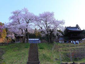 桜色に染まる天空の城のよう!山梨市の中腹に聳える「永昌院」