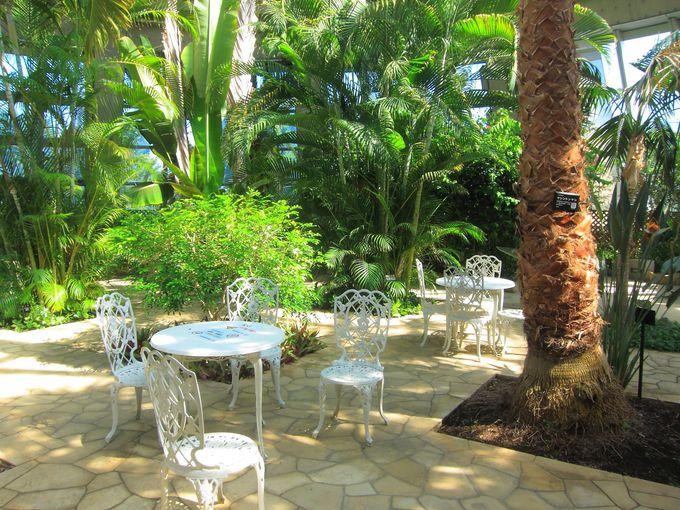 隣接する熱帯植物園も見学してみよう!