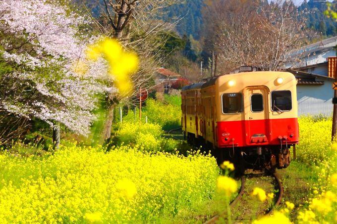 東京都のお隣にもかかわらずローカル線の多さに驚き!