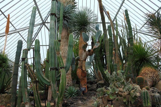 園の名前の由来ともなっているシャボテン温室へ