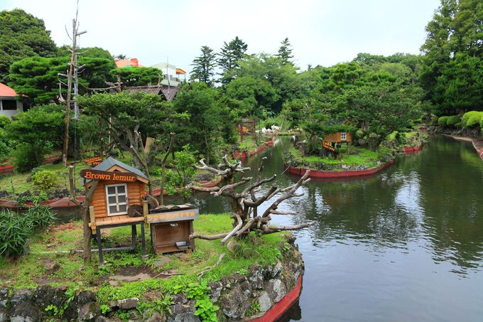 「伊豆シャボテン公園」へのアクセスは意外と楽!
