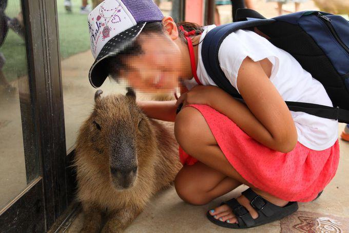 「伊豆シャボテン動物公園」で一番人気と言えば?!