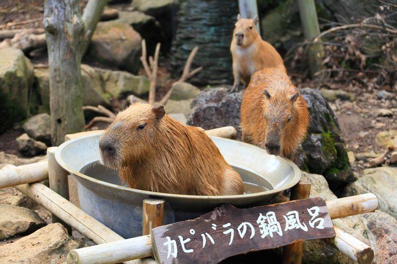 「伊豆シャボテン動物公園」サボテン狩りやカピバラとのふれあいも!
