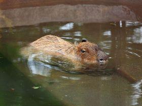 穴場の動物園でゆったり癒やしタイム!東京「井の頭自然文化園」