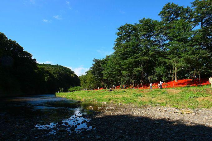雑木林沿いを流れる高麗川とのコラボレーションは・・・