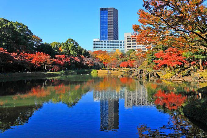 メインの見どころは水辺を取り囲む真っ赤な紅葉!