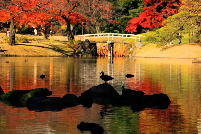水があるところにやってくる水鳥を芸術的に撮影!